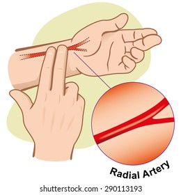 First Aid illustration person measuring pulse by Artery Radial. Ideal for catalogs, informative and medical guides