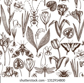 First spring flowers background.  Floral elements, insects drawings. Hand drawn botanical illustrations. Garden and forest plants seamless pattern.