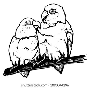 Fischers lovebird. Pair of parrots on perch. Vector black illustration of two birds sitting together