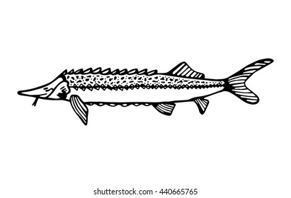 similar images  stock photos  u0026 vectors of catfish on white
