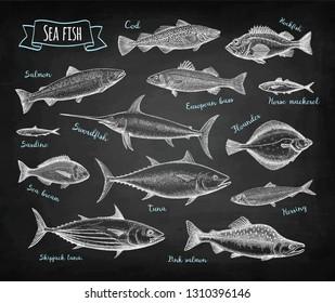 Fish big set. Chalk sketches isolated on blackboard background. Hand drawn vector illustration. Retro style.