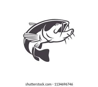 fish catfish image