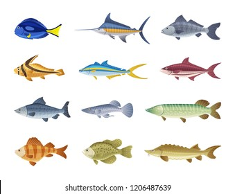 Fish characters set. Cartoon vector illustration. Fishing or food concept