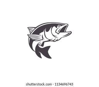 fish chub image