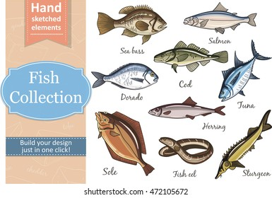 Fish collection: Dorado, Fish Eel, Tuna, Salmon, Halibut, Herring, Sea bass, Cod, Sturgeon. Vector illustration of fish for design menus, recipes and packages product.