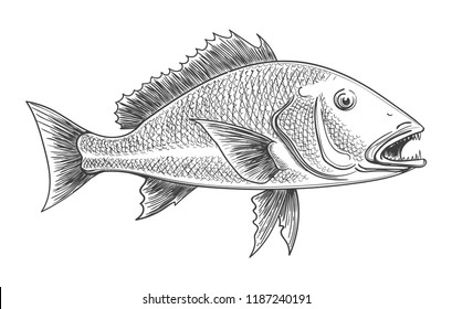 Fish engraving. Fishes animal retro ink sketch isolated on white background for vintage fishing decoration, vector illustration