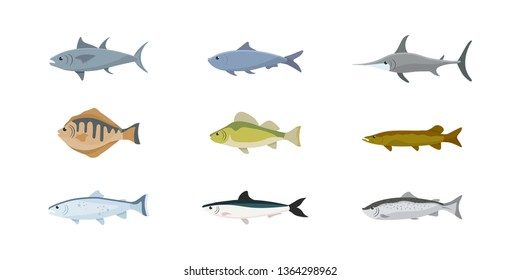 Fish flat illustrations set. Saltwater and freshwater fish sorts isolated cliparts pack. Lake, river, ocean, sea animals. Carp, anchovy, tuna, trout design elements. Swordfish, salmon