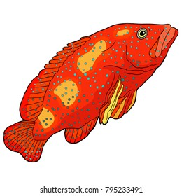 the Fish is grouper spotted vector illustration