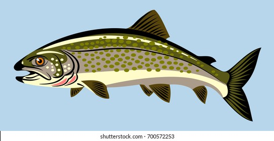 Fish image Trout