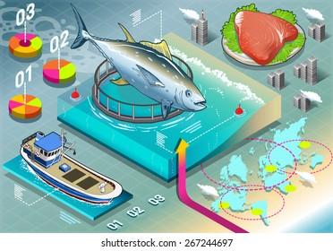 Fish Industry Breeding - Isometric food Infographic yellowfin Tuna Farming.