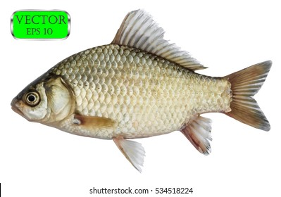 Fish isolated on white background. Vector illustration