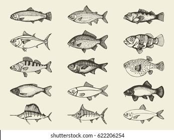 Fish river and marine vintage set. Vector hand drawings