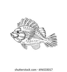 Fish. Sea creatures. Vector sketch. Drawn by hand