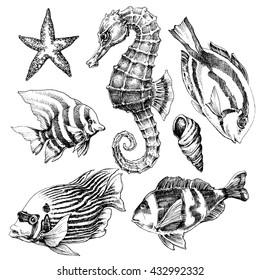 Fish, sea horse, marine life hand drawn set. Sea life vector sketch