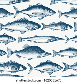 Fish seamless pattern. Hand drawn vector fishes illustration. Engraved style. Vintage different kinds of fish background.