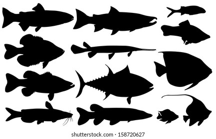 fish set isolated on white