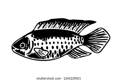 Vector Fishing Design Art Stock Vectors, Images & Vector Art