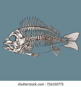 Fish skeleton hand drawn. Vector realistic illustration for your design logo, print or other.