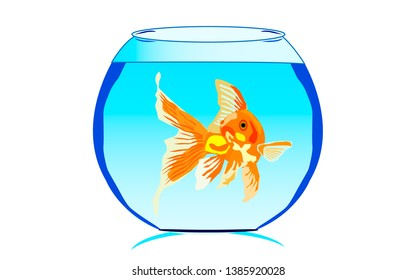 Fish in a sky blue water tank