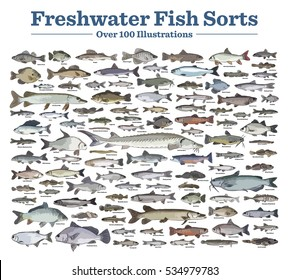 Fish sorts and types. Various freshwater fish. Hand drawn vector illustrations of different inland sorts.Over hundred color illustrations. Titles /  names written in English.