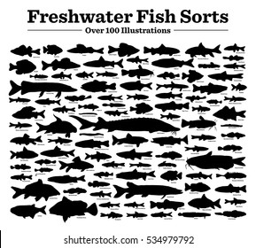 Fish sorts and types. Various freshwater fish. Hand drawn vector illustrations of different inland sorts.Over hundred silhouettes. Titles /  names written in English.