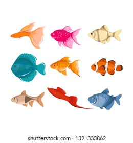 Fish vector characters. Colorful coral reef tropical fish set vector illustration. Sea fish collection isolated on white background.