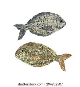 fish vector. fish dorado