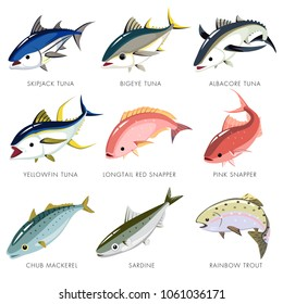 Fish vector isolated, Skipjack Tuna, Bigeye Tuna, Albacore Tuna, Yellowfin Tuna, Longtail Red Snapper, Pink Snapper, Chub Mackerel, Sardine, Rainbow trout