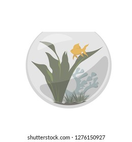 Fishbowl. Goldfish aquarium with green  seaweeds and blue corals