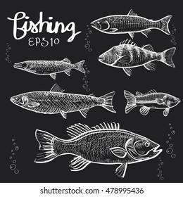 Fishes hand draw on blackboard,chalkboard vector EPS 10.