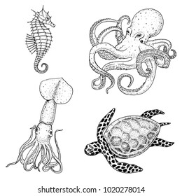 Fishes or Seafood or sea creature cheloniidae or green turtle and seahorse. octopus and squid, calamari. engraved hand drawn in old sketch, vintage style. nautical or marine. animals in the ocean.