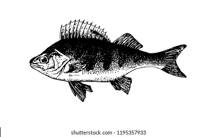 Fishes sketch vector isolated icon.