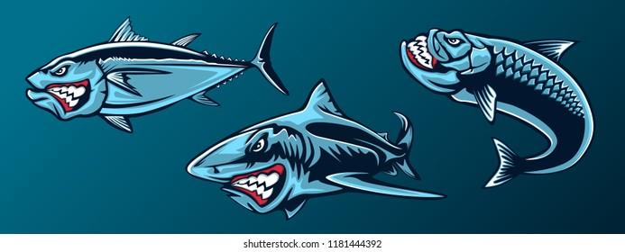 Fishing set of angry tuna, shark and piranha. Fishing emblem of ocean fish. Big eye tuna. Angry fishing club logotype. Dangerous fish.