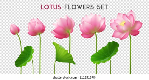 Five beautiful pink realistic lotus flowers set ornamental horizontal banner with lettering on transparent background vector illustration
