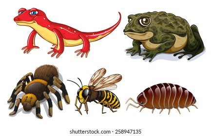 Five different types of small animals