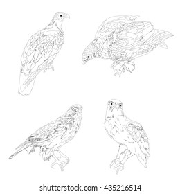 Five drawing vector isolated poly predatory birds
