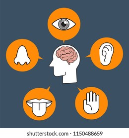 Five human senses demonstration color icon vector illustration collection set on dark blue background