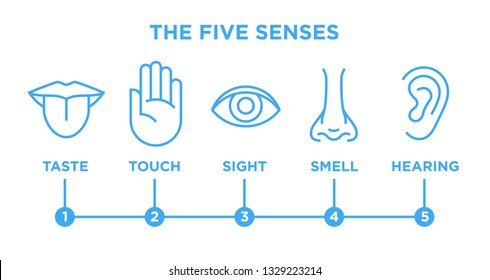 The five human senses icons set with nose for smell, tongue for taste, hand for touch, eye for sight and ear for hearing. Blue vector infographic line style illustration isolated on white background.