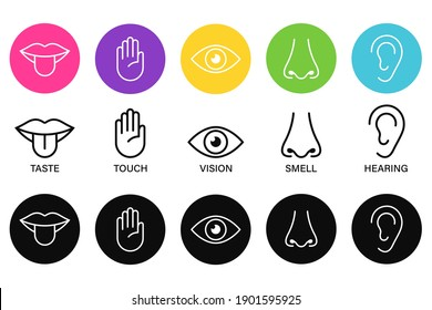 Five senses of human nervous system icon vector illustration, Simple line icons and color circles,
