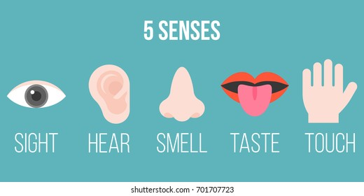five senses icon, flat design with name, sight, hear, smell, taste, touch