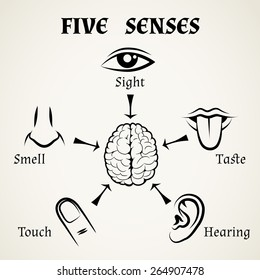 Five senses icons. Human eye, nose and ear, smell and taste and touch. Vector illustration