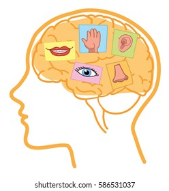Five Senses illustration. Sight, hearing, taste, smell and touch in human brain.