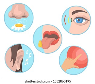 Five senses set. Smelling, tasting, touching, vision, hearing illustrations with nose, eye, tongue, ear and hand. Vector illustrations collection for human organs, sensations, anatomy concept