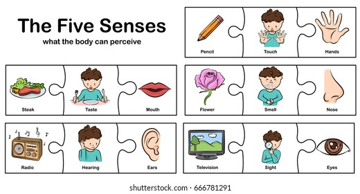 five senses - touch, taste, hearing, sight, smell.  - worksheet for education