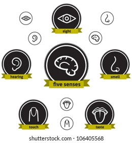Five Senses. Vector icon set about the five senses and the human brain.