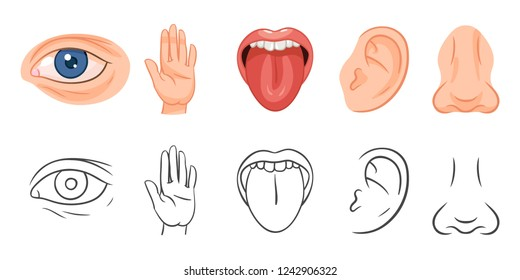 Five Senses Vector Illustrations. Taste, Sight, Touch, Smell, Hearing. Eye, Hand, Mouth, Tongue, Ear, Nose.