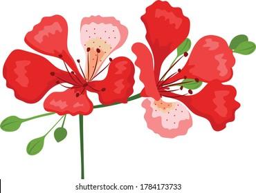 flamboyant flower hand drawing vector