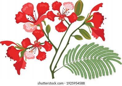 flamboyant red flowers with leaves