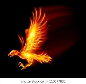 Flaming Hawk. Illustration on black background for design