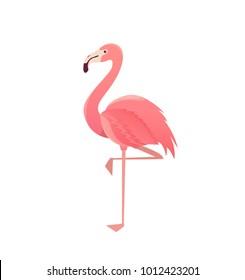 Flamingo bird illustration design on background